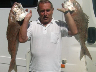 south Island Snapper